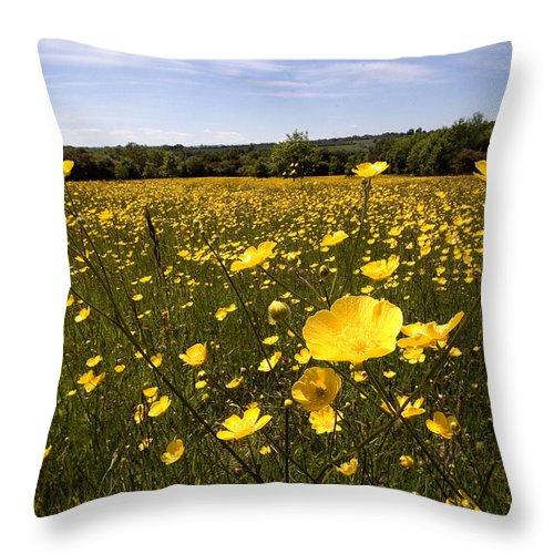 Buttercups Throw Pillow featuring the photograph Buttercup Field by Bob Kemp