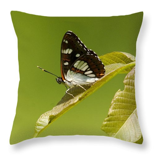 Nature Throw Pillow featuring the photograph Butterfly by Cliff Norton