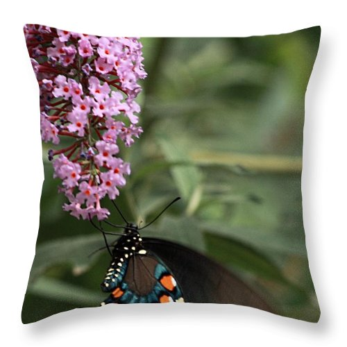 Butterfly Throw Pillow featuring the photograph Butterfly Delight by Cherie Duran