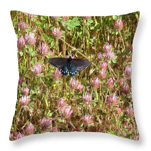 Nature Throw Pillow featuring the photograph Butterfly In Clover by Suzanne Leonard