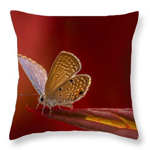 Red Throw Pillow featuring the photograph Butterfly In Red by John Greene