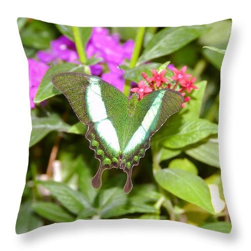 Garden Throw Pillow featuring the photograph Butterfly In The Garden by David Lee Thompson