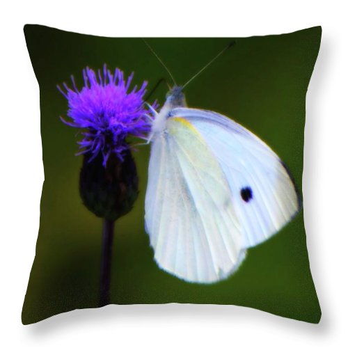 White Throw Pillow featuring the photograph Butterfly In White by John Feiser