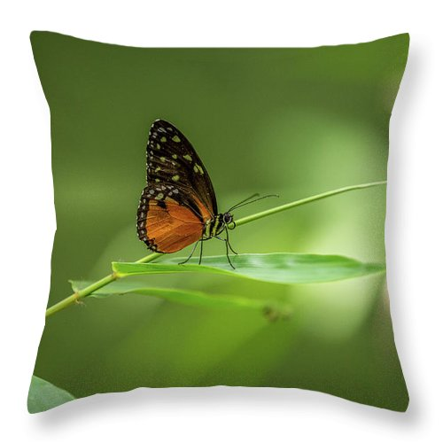 Butterfly Throw Pillow featuring the photograph Golden Helicon Butterfly by Jimmy Tran