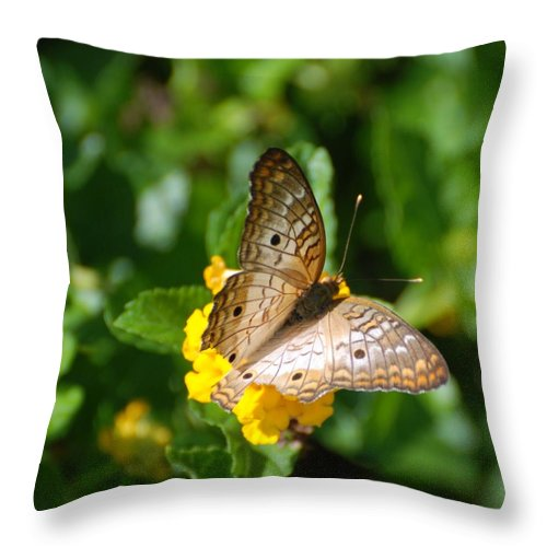 Butterfly Throw Pillow featuring the photograph Butterfly Land by Rob Hans