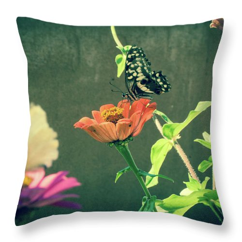 Butterfly Flower Throw Pillow featuring the photograph Butterfly by Marissa Meiring