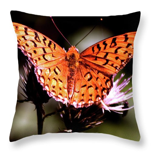 Butterfly Throw Pillow featuring the photograph Butterfly by Mark Ivins