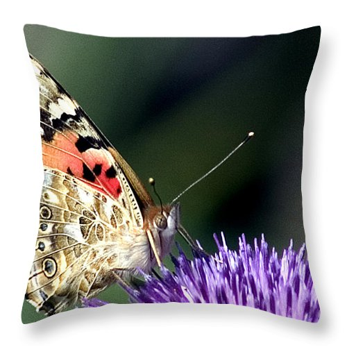 Butterfly Throw Pillow featuring the photograph butterfly on a Silybum marianum I by Nahum Budin