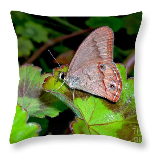 Photography Throw Pillow featuring the photograph Butterfly On Geranium Leaf by Kaye Menner