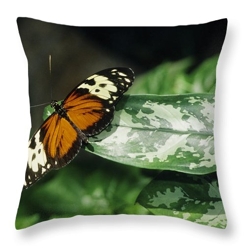 Butterfly Throw Pillow featuring the photograph Butterfly On Leaf by Steve Somerville