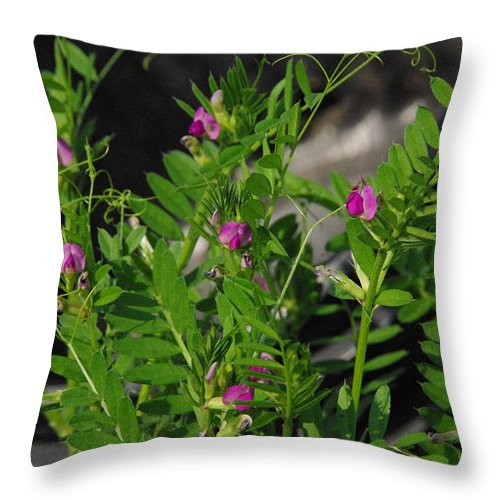 Wildflower Throw Pillow featuring the photograph Butterfly Pea by Robyn Stacey