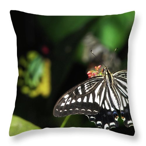 Butterfly Throw Pillow featuring the photograph Butterfly Perfect by JAMART Photography
