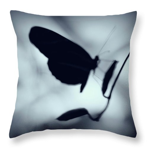 Spring Throw Pillow featuring the photograph Butterfly Silhouette by Megan Miller
