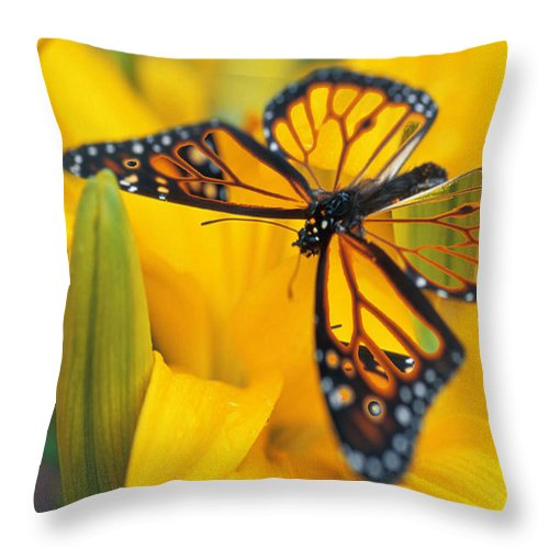 Butterfly Throw Pillow featuring the digital art Butterfly by Tim Allen