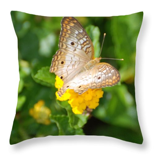 Butterfly Throw Pillow featuring the photograph Butterflywith Dots by Rob Hans