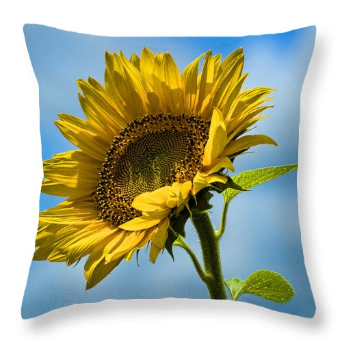 Sunflower Throw Pillow featuring the photograph Buttonwood Sunflower 2 by Edward Sobuta