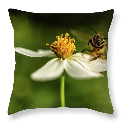 Flowers Throw Pillow featuring the photograph Buzz Off by Louise Lindsay