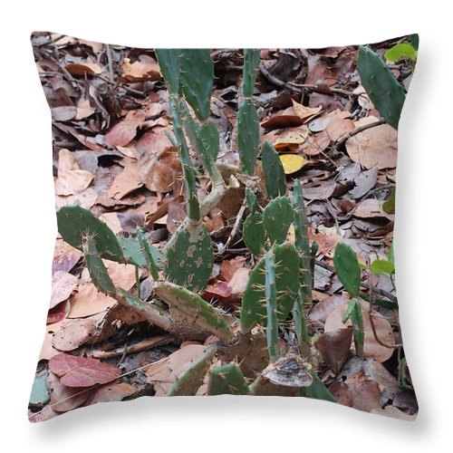 Cacti Throw Pillow featuring the photograph Cacti And Leaves by Rob Hans
