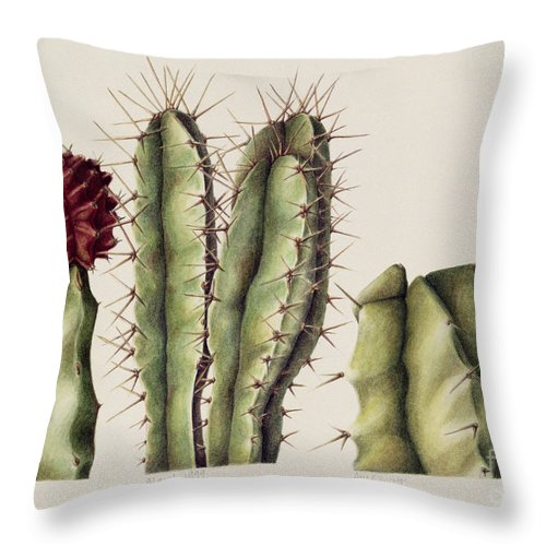Botanical Throw Pillow featuring the painting Cacti by Annabel Barrett