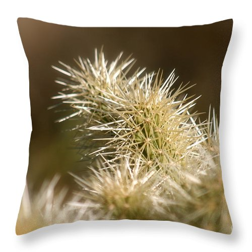 Cactus Throw Pillow featuring the photograph Cacti by Nadine Rippelmeyer