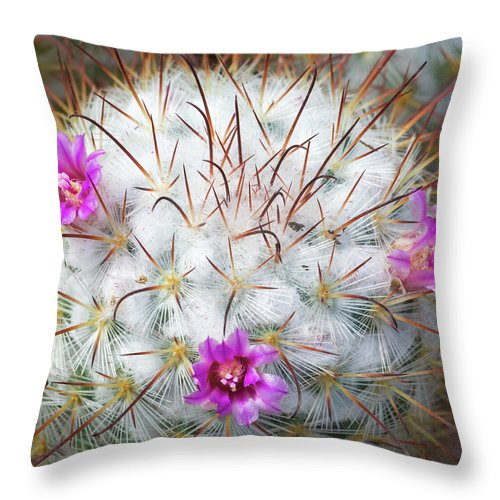 Cactus Throw Pillow featuring the photograph Cactus Bloom by Georgette Grossman