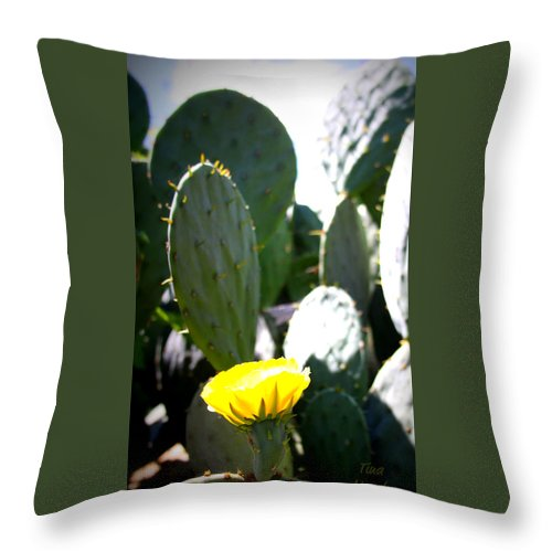 Cactus Throw Pillow featuring the photograph Cactus Bloom by Tina Meador