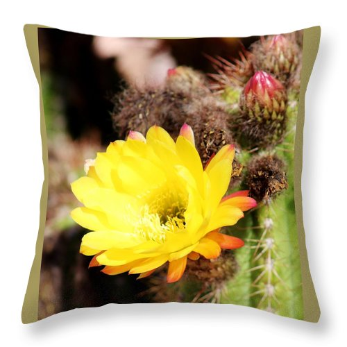 Flora Throw Pillow featuring the photograph Cactus Blooms Yellow 050214g by Edward Dobosh
