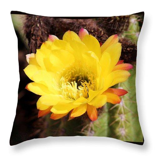 Flora Throw Pillow featuring the photograph Cactus Blooms Yellow 050214k by Edward Dobosh