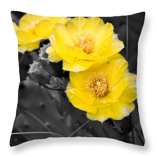 Cactus Throw Pillow featuring the photograph Cactus Blossom by Christopher Holmes