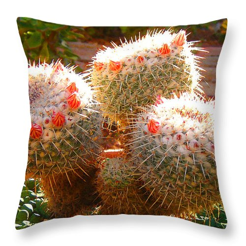 Landscape Throw Pillow featuring the photograph Cactus Buds by Amy Vangsgard