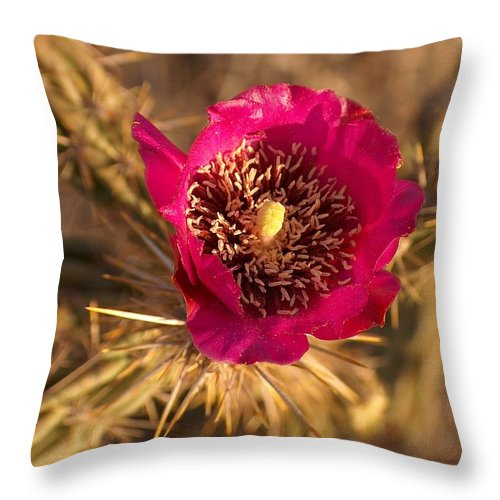 Cactus Flowers Wildflowers Throw Pillow featuring the photograph Cactus Flower 1 by Tim McCarthy