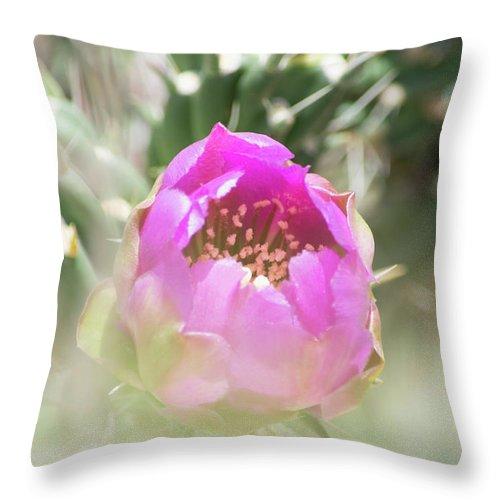Cactus Throw Pillow featuring the photograph Cactus Flower by Deborah Reinhardt - Adams