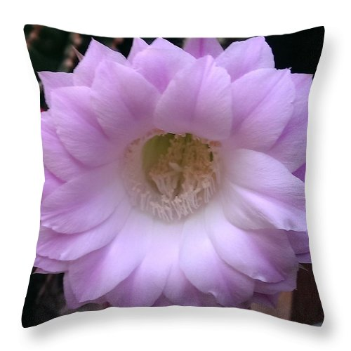 Throw Pillow featuring the photograph Cactus Flower Purple by Nick Blake