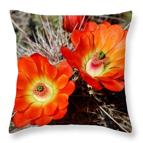 Cacti Throw Pillow featuring the photograph Cactus Flower Twins by Edward Dobosh