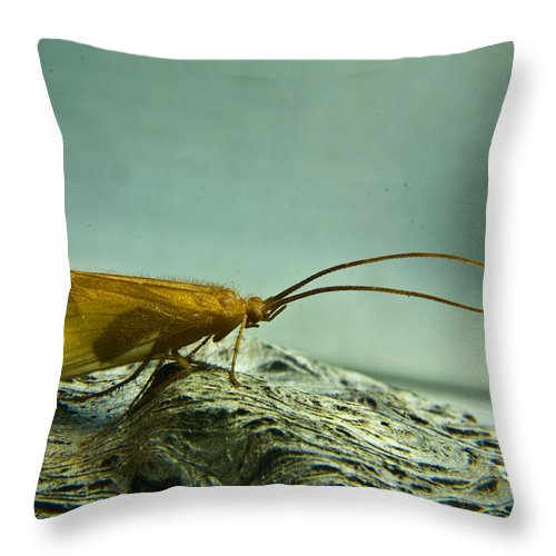 Caddisfly Throw Pillow featuring the photograph Caddisfly by Douglas Barnett