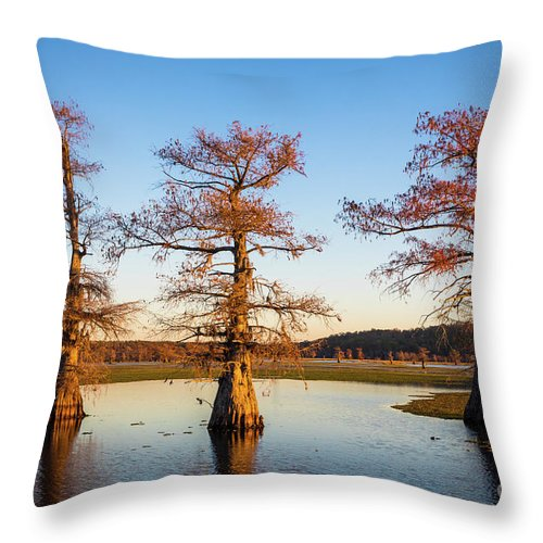 America Throw Pillow featuring the photograph Caddo Three Trees by Inge Johnsson