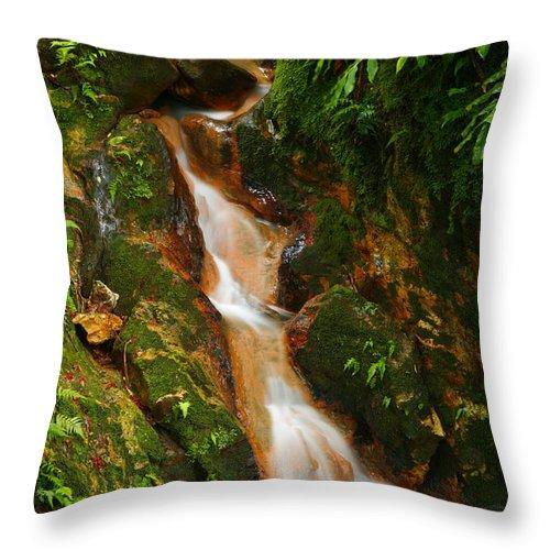 Azores Throw Pillow featuring the photograph Caldeira Velha Park by Gaspar Avila
