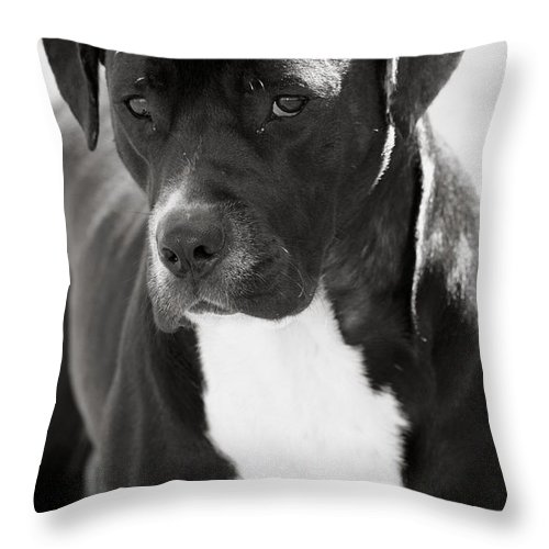 Betsy Lamere Throw Pillow featuring the photograph Caleb by Betsy LaMere
