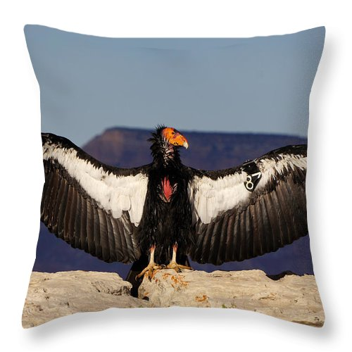 Ann Keisling Throw Pillow featuring the photograph California Condor by Ann Keisling