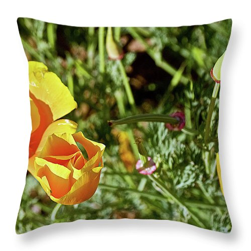 California Poppies In Mariposa Throw Pillow featuring the photograph California Poppies In Mariposa, California by Ruth Hager