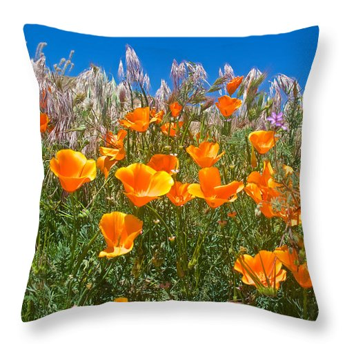 California Poppies Throw Pillow featuring the photograph California Poppies, White Grasses And Blue Sky In Windy Antelope Valley Ca Poppy Reserve by Ruth Hager