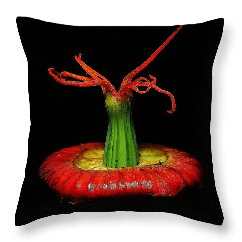 California Poppy Throw Pillow featuring the photograph California Poppy - Scavenge by Onie Dimaano