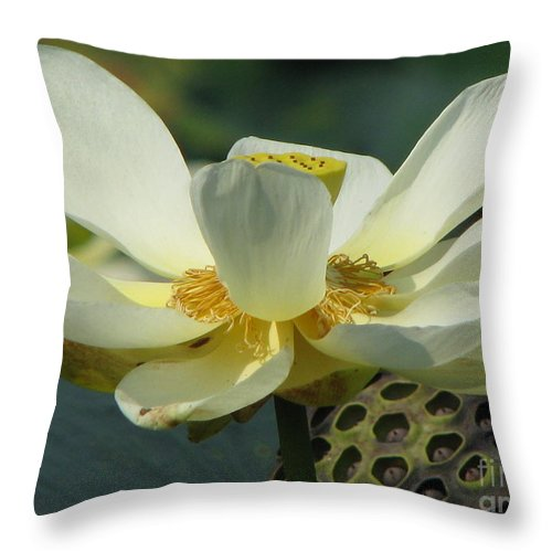 Lotus Throw Pillow featuring the photograph Calm by Amanda Barcon