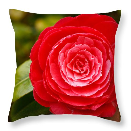 Azores Throw Pillow featuring the photograph Camellia Japonica by Gaspar Avila