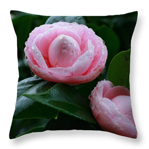 Bloom Throw Pillow featuring the photograph Camellias by Gaspar Avila