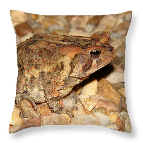 Camouflage Throw Pillow featuring the photograph Camouflage Toad by Brett Winn