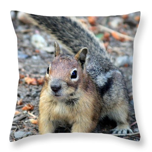Chipmunk Throw Pillow featuring the photograph Campground Chipmunk by Carol Groenen