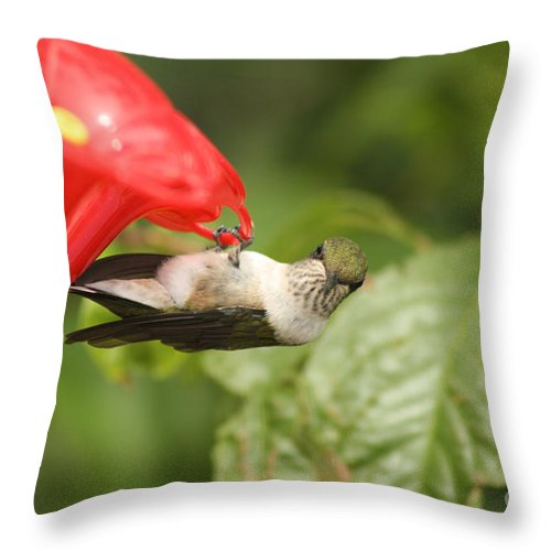 Female Throw Pillow featuring the photograph Can I Help You Hummingbird by Cathy Beharriell