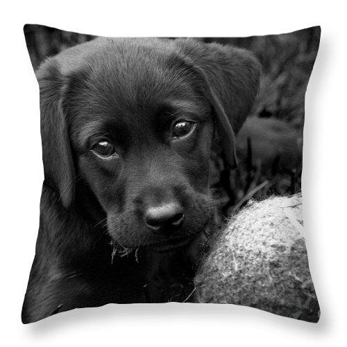 Puppy Throw Pillow featuring the photograph Can We Play by Cathy Beharriell