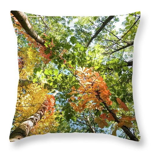 Canada Throw Pillow featuring the photograph Canadian Foliage by Nick Mares